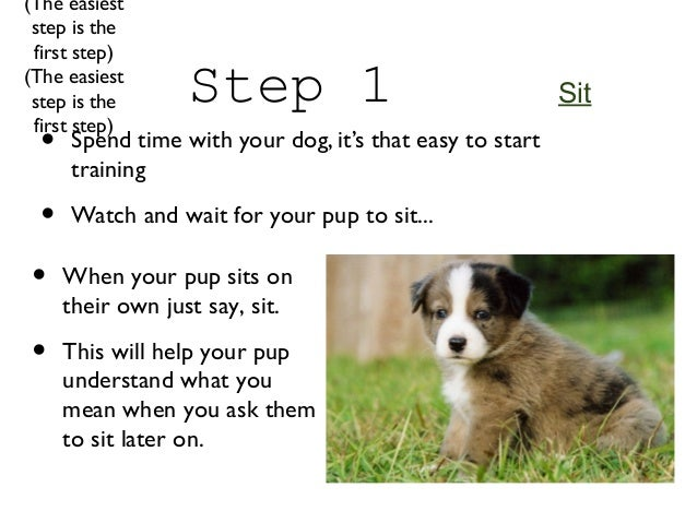 How To Train Your Dog Down