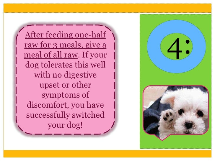 How To Transition Your Dog To Raw Food