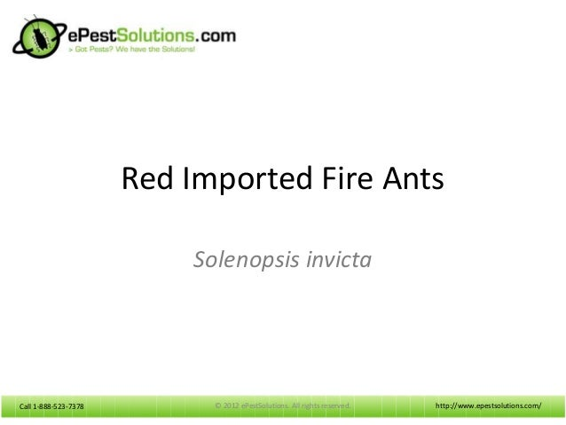 Call 1-888-523-7378Call 1-888-523-7378 Red Imported Fire Ants Solenopsis invicta http://www.epestsolutions.com/© 2012 ePes...