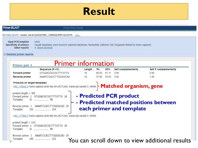 How To Use Primer Blast For Checking Primer Specificity