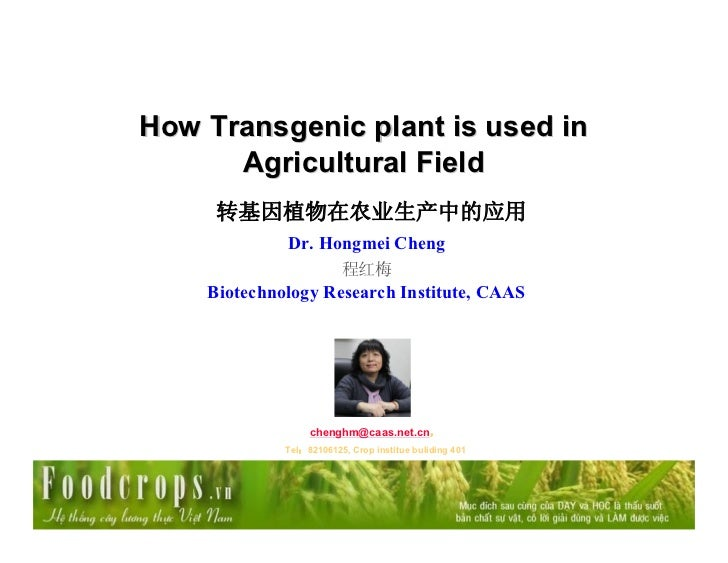 How Transgenic plant is used in      Agricultural Field     转基因植物在农业生产中的应用             Dr. Hongmei Cheng                  ...