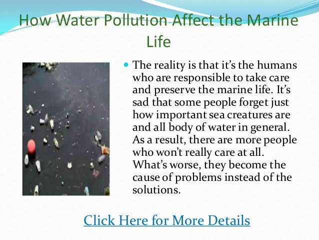 The Negative Effects Of Marine Pollution