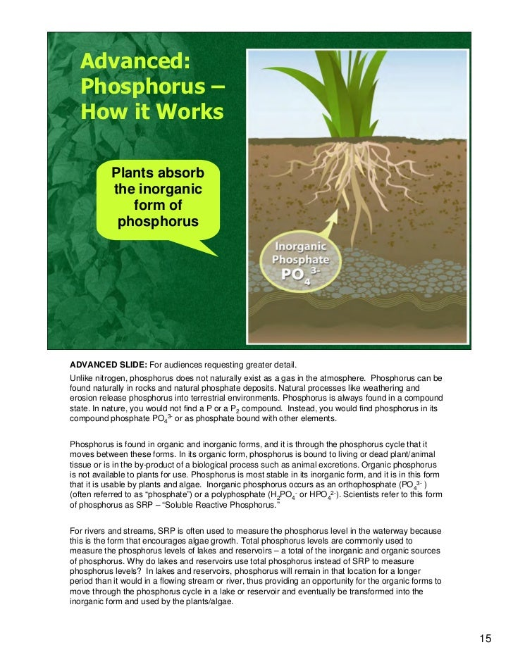 Where Can You Find Phosphorus In Nature