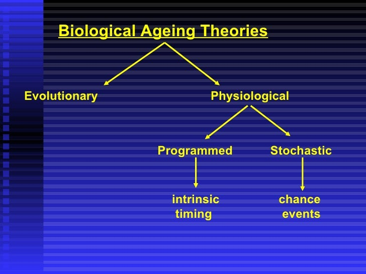 Theories of Aging: An Ever-Evolving Field
