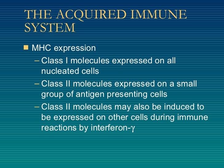 THE ACQUIRED IMMUNE SYSTEM <ul><li>MHC expression </li></ul><ul><ul><li>Class I molecules expressed on all nucleated cells...