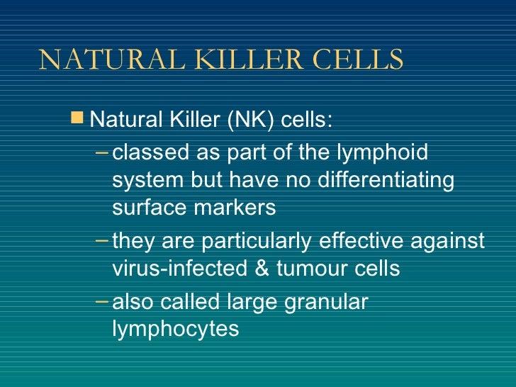 NATURAL KILLER CELLS <ul><li>Natural Killer (NK) cells: </li></ul><ul><ul><li>classed as part of the lymphoid system but h...
