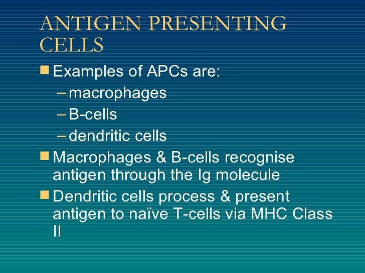 ANTIGEN PRESENTING CELLS <ul><li>Examples of APCs are: </li></ul><ul><ul><li>macrophages </li></ul></ul><ul><ul><li>B-cell...