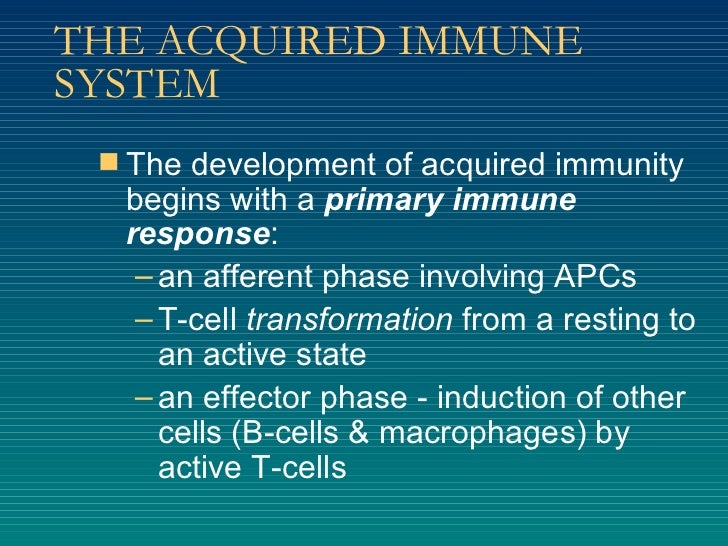 THE ACQUIRED IMMUNE SYSTEM <ul><li>The development of acquired immunity begins with a  primary immune response : </li></ul...