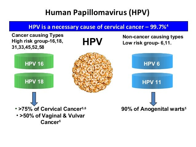Cervical Cancer Significance Of Hpv 16 18: Hpv Vaccination