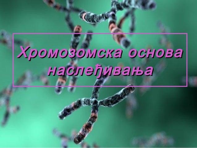 Хромозомска основа наслеђивања