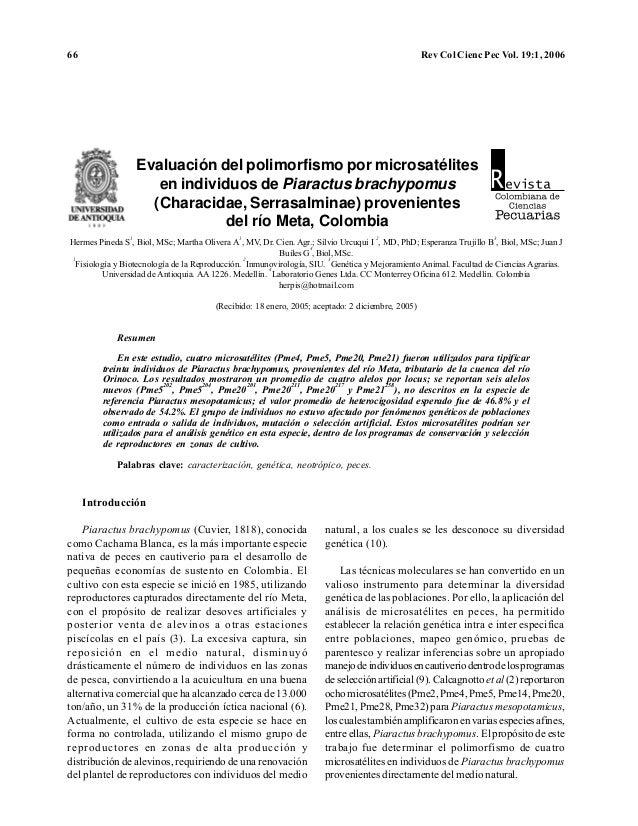 66 Rev Col Cienc Pec Vol. 19:1, 2006 Evaluación del polimorfismo por microsatélites en individuos de Piaractus brachypomus...