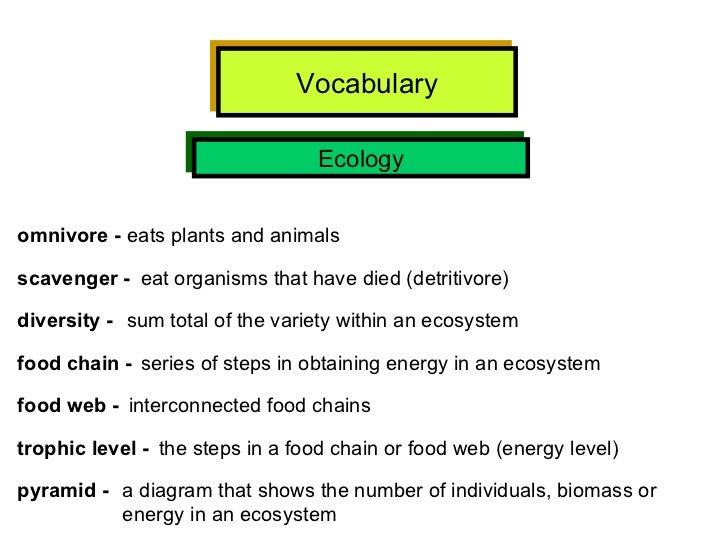 Interconnected Food Chains That Have A Variety Or Organisms