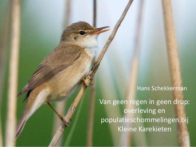 Van geen regen in geen drup: overleving en populatieschommelingen bij Kleine Karekieten Hans Schekkerman