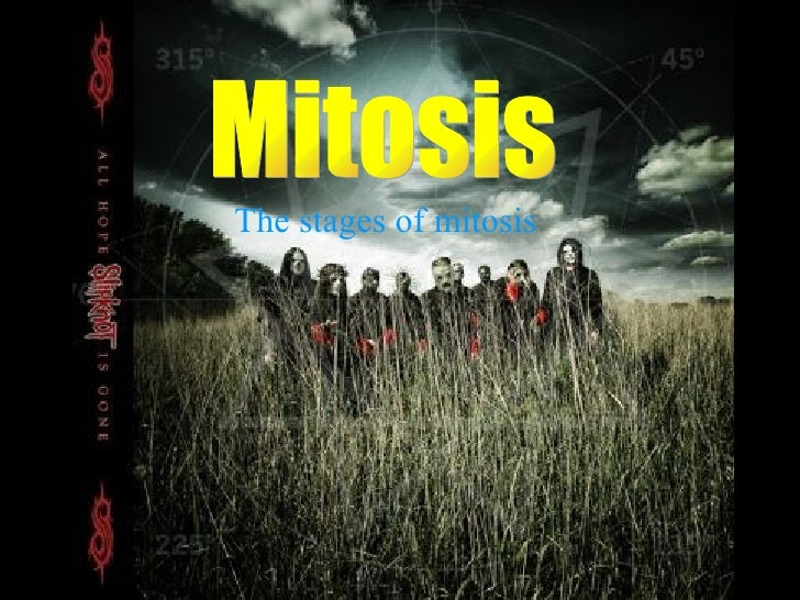 Mitosis The stages of mitosis