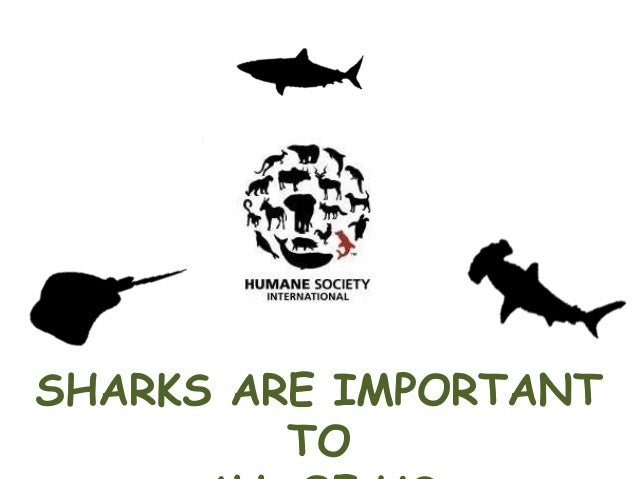 SHARKS ARE IMPORTANT TO