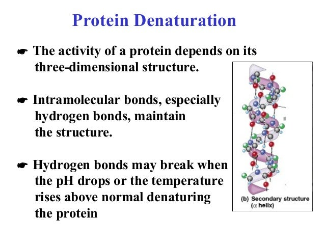 protein denaturation Definitions of denaturation biochemistry, synonyms, antonyms, derivatives of denaturation biochemistry, analogical dictionary of denaturation biochemistry (english.