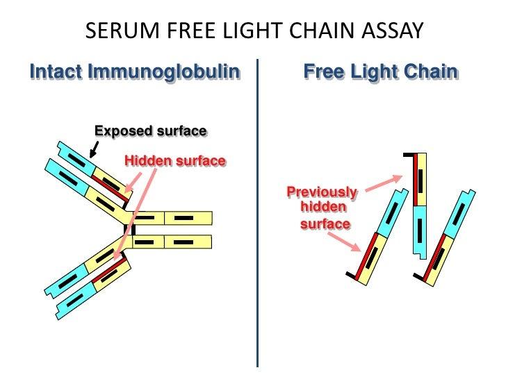 Serum Free Light Chains