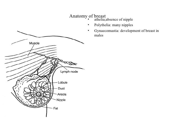 female reproductive system, Muscles