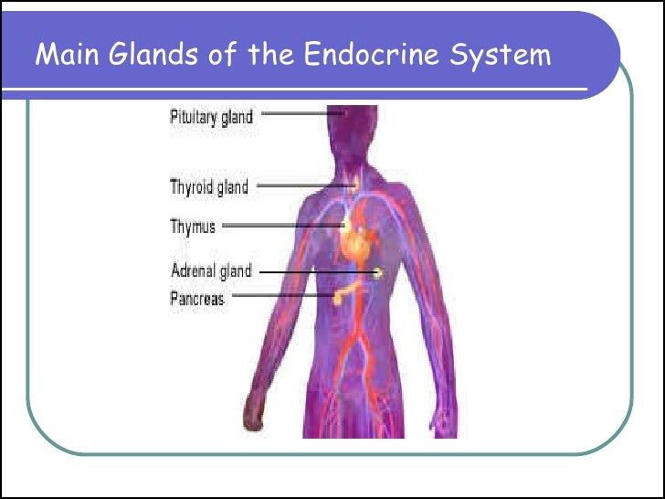 Magnificent Endocrine System Pictures For Kids Elaboration - Anatomy ...