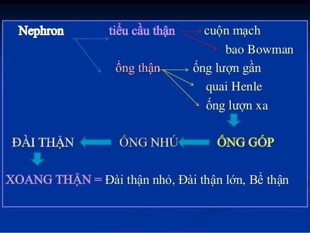THẬN CẤU TẠO VI THỂ: NANG BOWMANN TIỂU ĐỘNG MẠCH NHẬP TIỂU ĐỘNG MẠCH XUẤT TIEÅU THEÅ THAÄN Cuoän mao maïch
