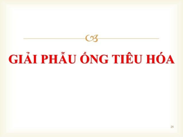  GIẢI PHẪU ỐNG TIÊU HÓA 25