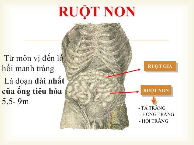  RUỘT NON RUỘT GIÀ - TÁ TRÀNG - HỔNG TRÀNG - HỒI TRÀNG RUỘT NON Từ môn vị đến lỗ hồi manh tràng Là đoạn dài nhất của ống ...