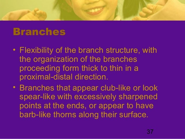 37Branches• Flexibility of the branch structure, withthe organization of the branchesproceeding form thick to thin in apro...