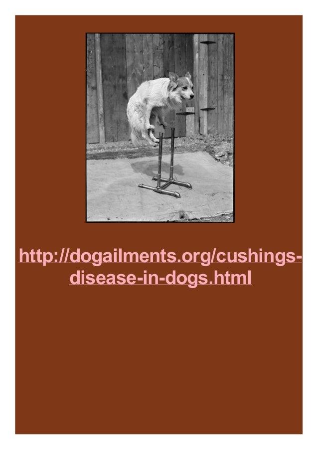 http://dogailments.org/cushings- disease-in-dogs.html