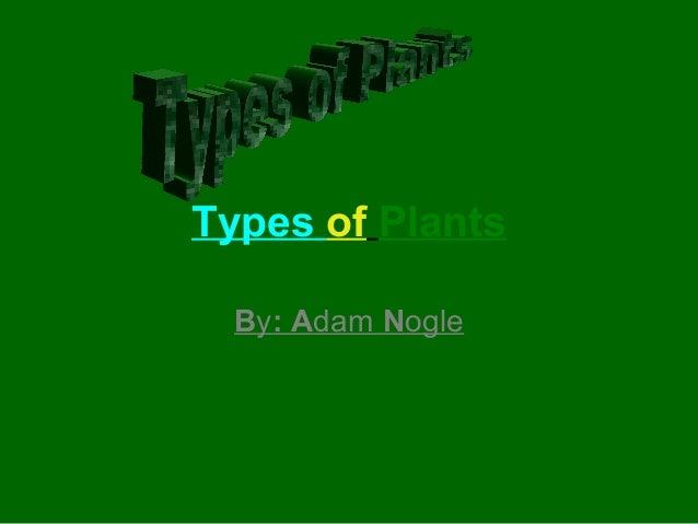 Types of Plants By: Adam Nogle