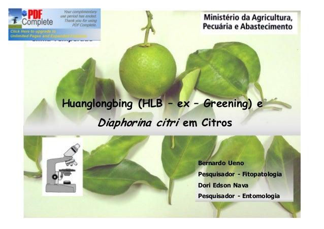 Huanglongbing (HLB – ex – Greening) e  Diaphorina citri em Citros  Bernardo Ueno  Pesquisador - Fitopatologia  Dori Edson ...