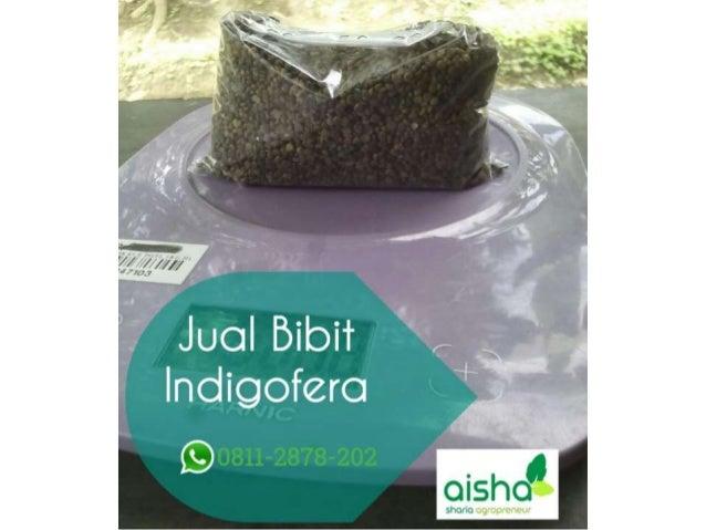 Hub 0811 2878 202 Pakan Kambing Etawa Jual Bibit Indigofera Bandung