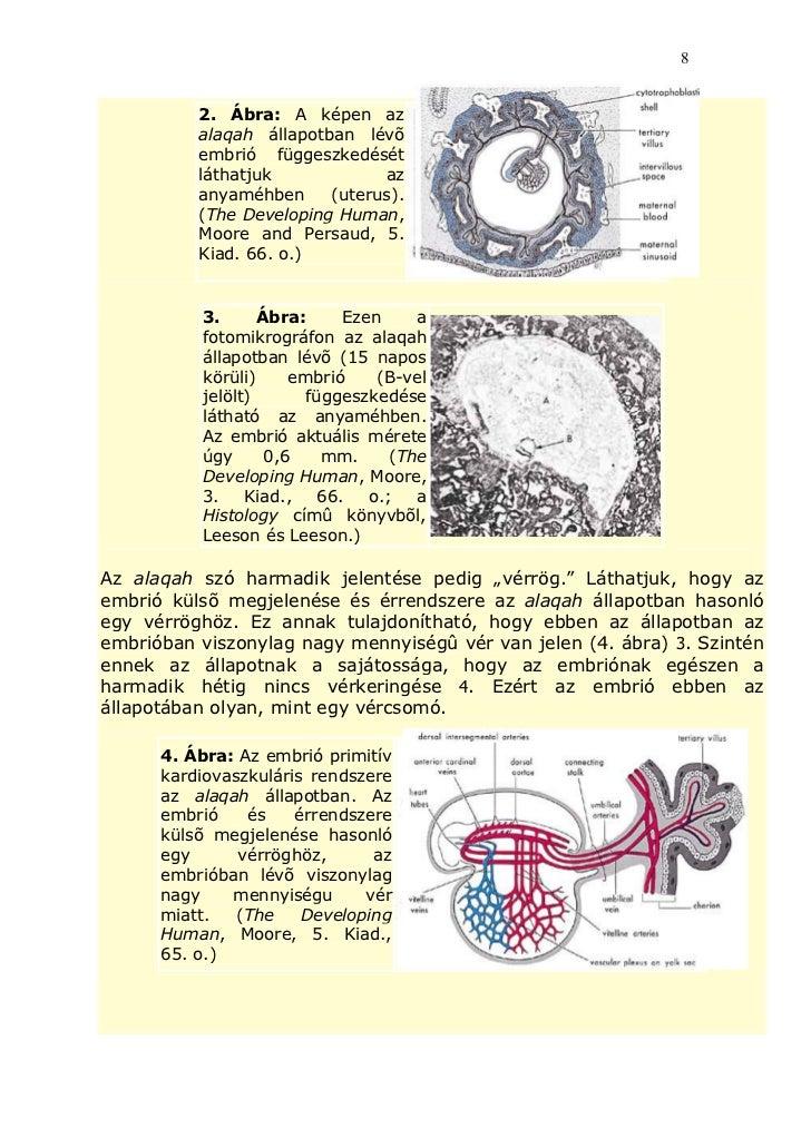 Embriogenezis jelentése