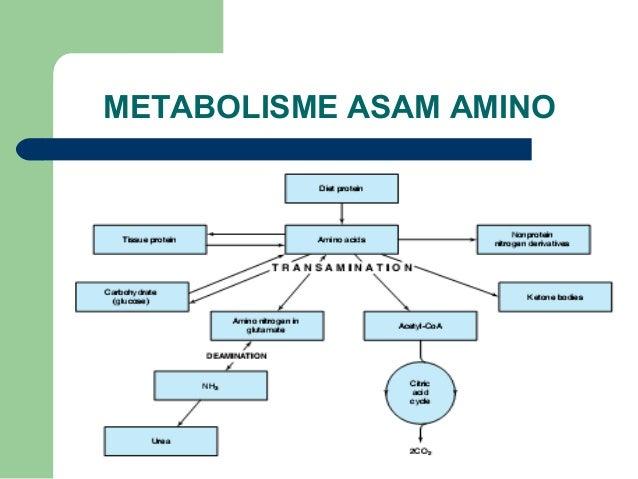 MAKALAH Metabolisme Asam Amino