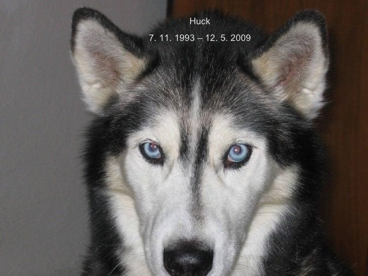 Huck 7. 11. 1993 – 12. 5. 2009
