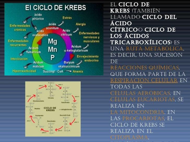 El ciclo de Krebs (también llamado ciclo del ácido cítrico o ciclo de los ácidos tricarboxílicos ) es una ruta metabó...