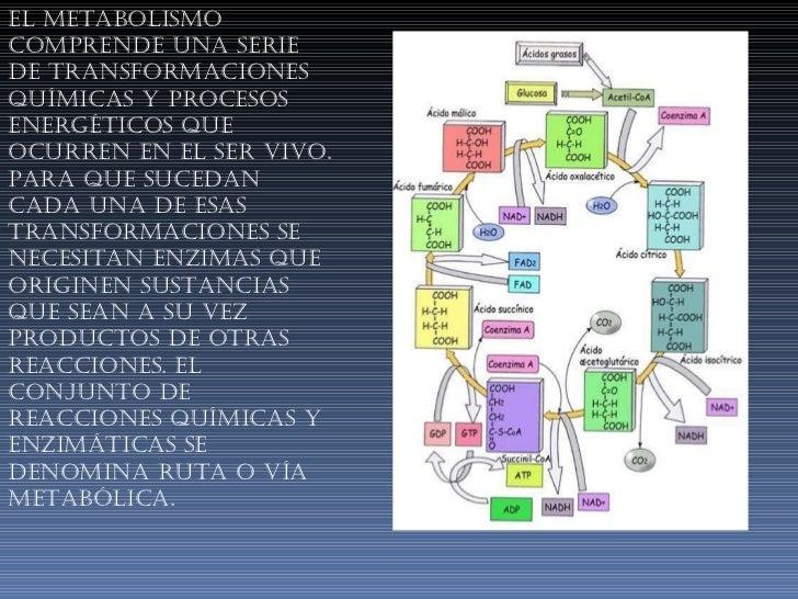 El metabolismo comprende una serie de transformaciones químicas y procesos energéticos que ocurren en el ser vivo. Para qu...