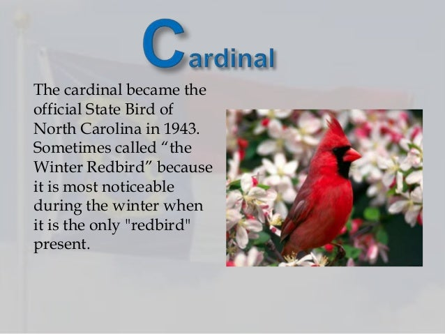 4 the cardinal became the official state bird of north carolina