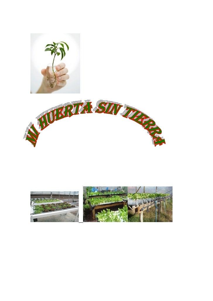 Huerta hidroponica dominguez