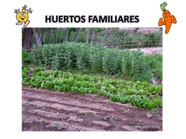 huertos caseros