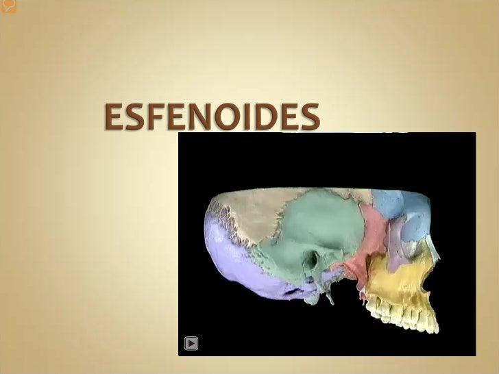 Apófisis Bacilar del  Occipital