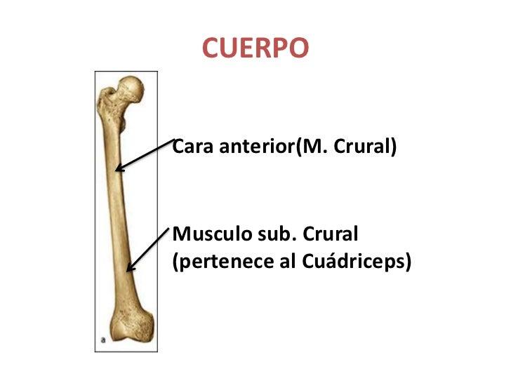 Hueso femur
