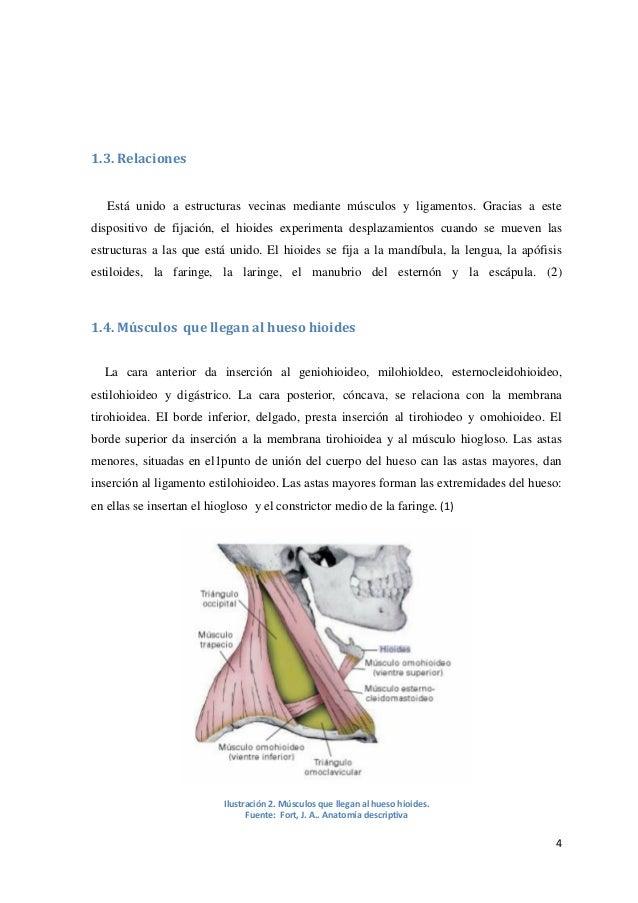 Hueso hioides y esófago