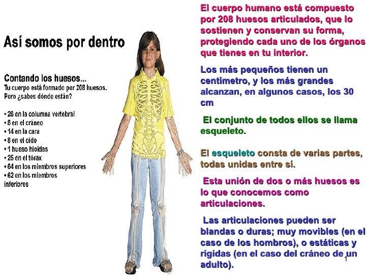 El cuerpo humano está compuesto por 208 huesos articulados, que lo sostienen y conservan su forma, protegiendo cada uno de...
