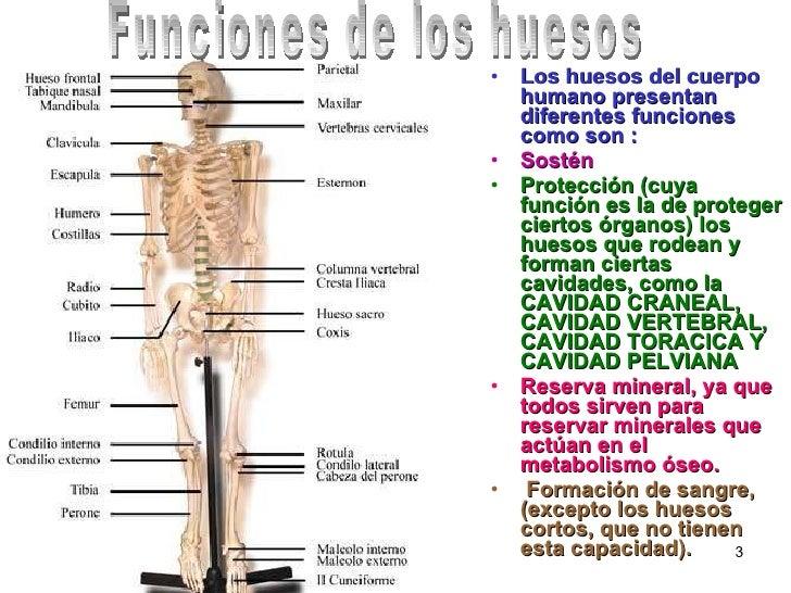 huesos 3 728