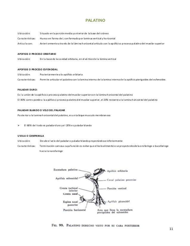 11 PALATINO Ubicación: Situadoenla porciónmediayanterior de la base del cráneo Características: Hueso en forma de L confor...