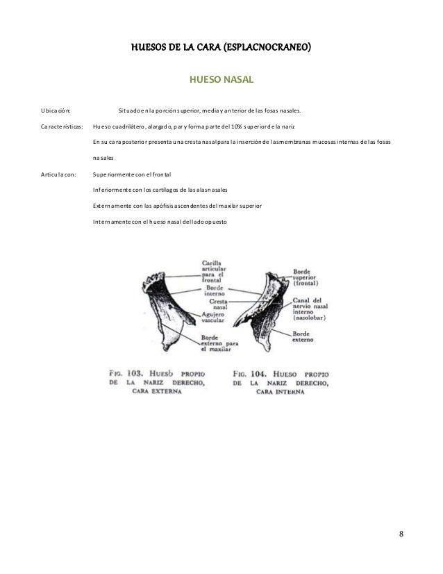 8 HUESOS DE LA CARA (ESPLACNOCRANEO) HUESO NASAL Ubicación: Situadoenla porciónsuperior, media yanterior de las fosas nasa...