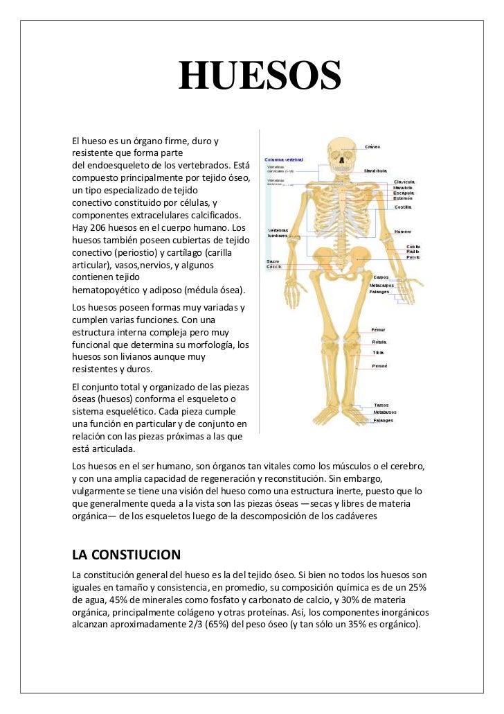 Huesos anatomia