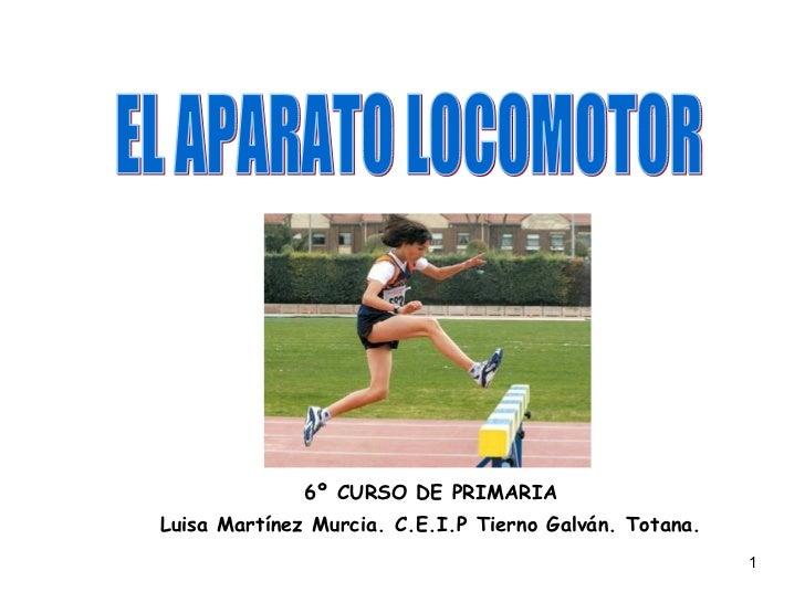 6º CURSO DE PRIMARIA Luisa Martínez Murcia. C.E.I.P Tierno Galván. Totana. EL APARATO LOCOMOTOR