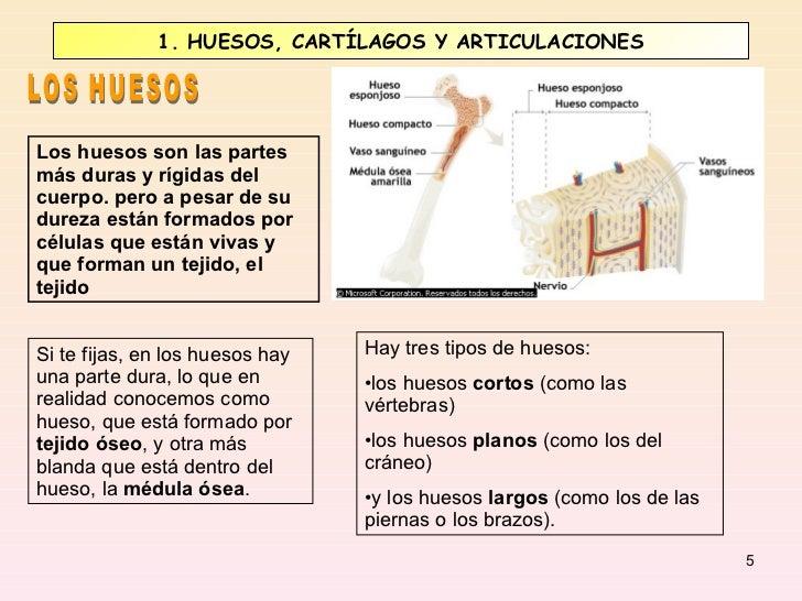 Huesos y m sculos for Como estan formados los suelos