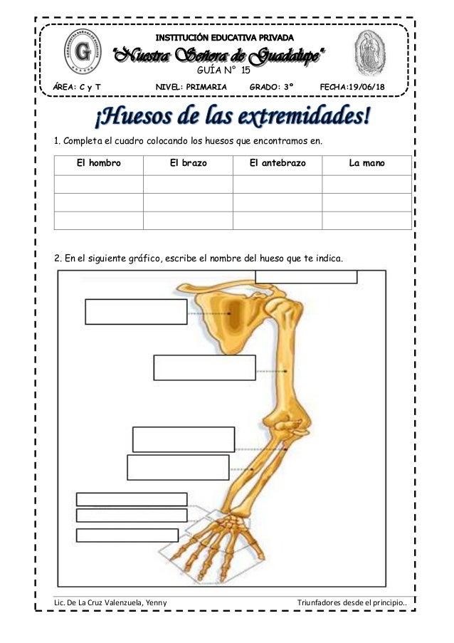 Asombroso Huesos En El Brazo Ornamento - Anatomía de Las Imágenesdel ...